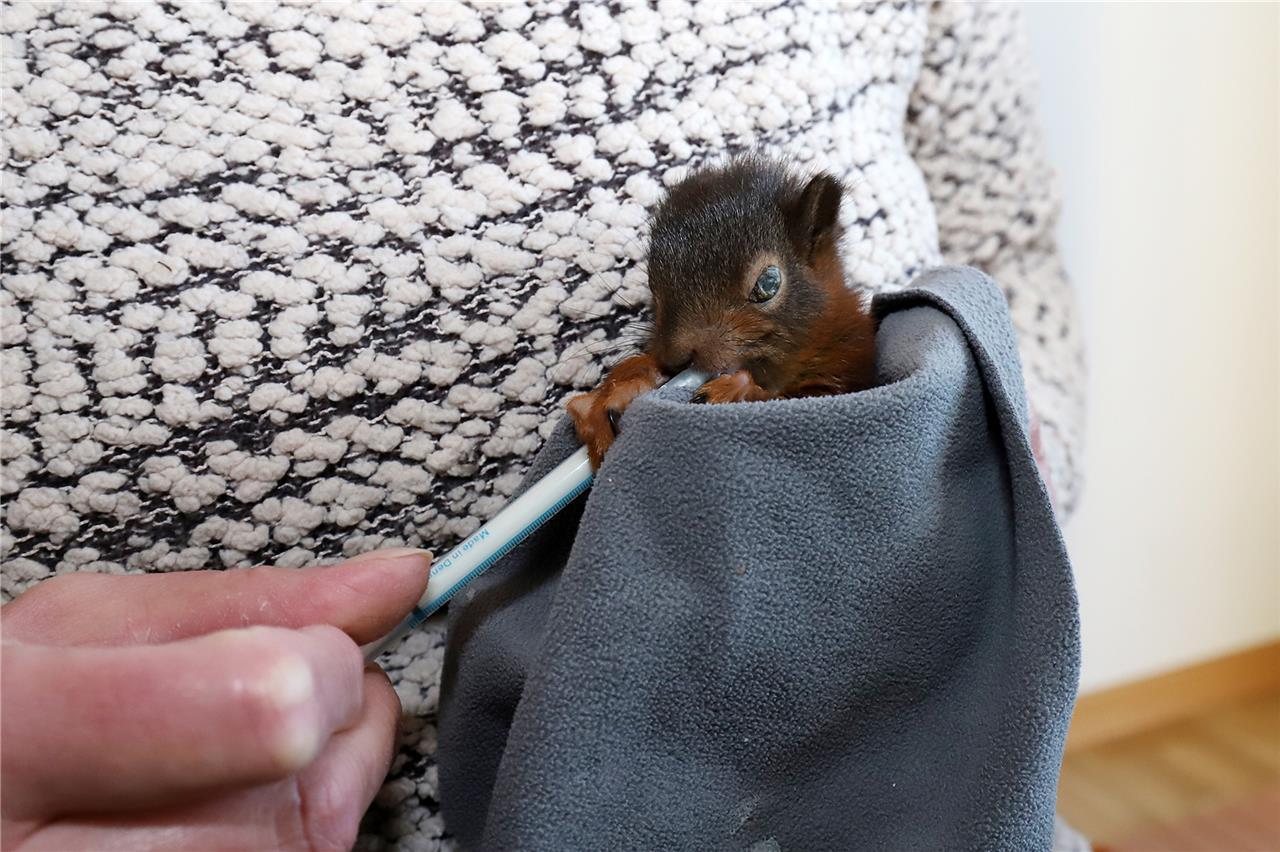 Feuchte Eichhörnchen Hintertüre-Lesben Pornos