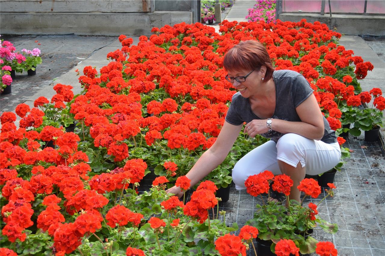 Von Beruf Floristin Mit Blumen Auch Emotionen Schenken